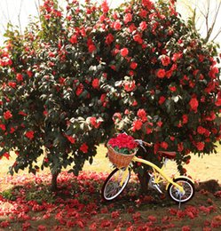 Wholesale 10 feet CM background photography photo Bicycle safflower trees backdrop