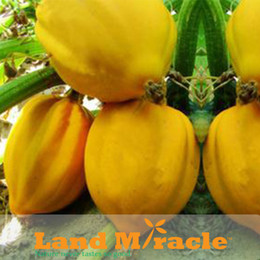 Wholesale 1 Original Pack Seeds pack Sweet Peach like Pumpkin Vegetable Seeds ORGANIC NON GMO HEIRLOOM Melon Seeds B070