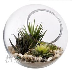 Wholesale 2pcs set round glass succulent terrarium moss terrarium indoor garden terrarium desktop fish tank for house ornament home decor