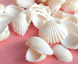 Wholesale Crafts Natural sea shells cm white color home decor aquarium decoration nautical wedding decoration