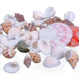 Wholesale New Approx g Beach Mixed SeaShells Mix Sea Shells Shell Craft SeaShells Aquarium