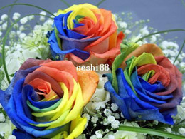 200 Seeds Rare Holland Rainbow Rose Flower Seed Free Shipping