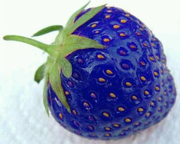 Wholesale Fruit seeds blue strawberry seeds DIY Garden fruit seeds potted plants
