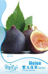 Wholesale 1 Original Packs seeds pack Ficus carica L Purple Patlican Fig Fresh Seeds Juicy High Vitamin C Tropical Fruit Lemon Fruit B115