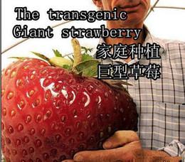 Wholesale 30 OFF big giant red fruit strawberry seeds DIY Garden fruit seeds balcony seeds