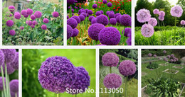 Wholesale Promotion Purple Giant Allium Giganteum seeds Beautiful Flower Seeds Garden Plant the budding rate rare flower for kid N