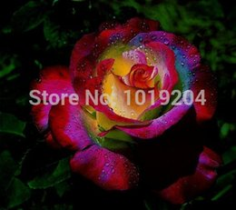 Wholesale French landscape and colorful roses perfume rare plant a rose seeds a group of red roses