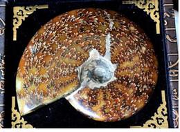 Wholesale Natural RARE Iridescent AMMONITE AMMOLITE SHELL GEM FOSSIL SPECIMEN HEALING g g