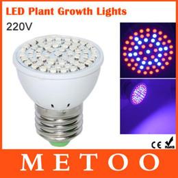 2017 led grow bleu ampoule Full Spectrum Led Grow Light E27 5W 220V ampoule lampe 61Leds 42 Rouge 19 Bleu pour Angiosperme et hydroponique led grow bleu ampoule sortie
