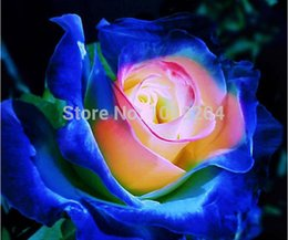 Wholesale 200 PC rare Japanese Smurfs rose seed bonsai flower seeds beautiful plant