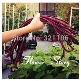 Wholesale Long Pole Bean Seeds Purple color Asparagus Beans Cowpea Seeds rare color good taste Heirloom Vegetable