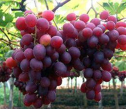 Wholesale 50seds bag fertilizer fruit seed grape seed fruit balcony potted