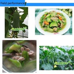 2017 heat Garden Asian vegetabl F1 hybrid NON GMO Asian vegetable dIY organic green freshSmooth Luffa Dish Cloth Gourd Sponge Gourd seede