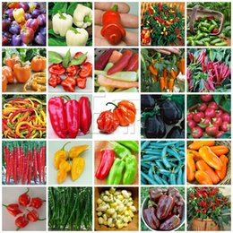 Wholesale Heirloom Mixed Pepper Seeds Vegetable Cheap Easy Backyard Garden
