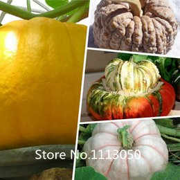 Wholesale New Arrival giant pumpkin seeds vegetable seeds on sale