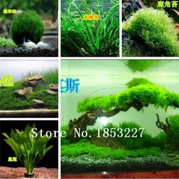 Wholesale Hot selling aquarium grass seeds mix water aquatic plant grass seeds kinds family easy plant seeds