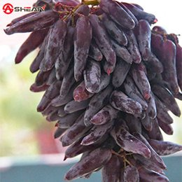 Wholesale 100 Seeds Pack Very Rare Finger Grape Seeds Advanced Fruit Seed Natural Growth Grape Delicious Fruit Plants