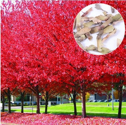JAPANESE RED MAPLE TREE WITH HERMETIC PACKAGE * VERY BEAUTIFUL * JAPAN MAPLE NEW SEEDS * PLUS MYSTERIOUS GIFT! 10pcs lot RS31
