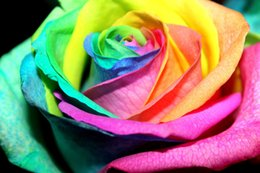 Wholesale New Arrival Colorful Rainbow Rose Seeds Pieces Seeds Per Package Hot Selling Garden Plants