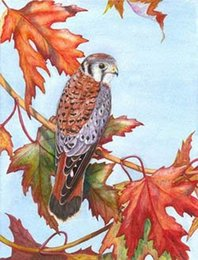Animal oil painting Birds Gift&Free Shipping Birds-0012