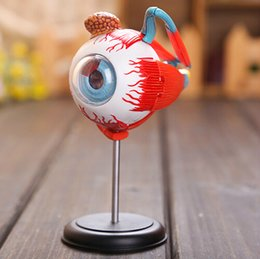 Wholesale New D MASTER Human Eye structure anatomical model Science toy Three dimensional jigsaw puzzle Medical model