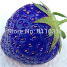 Wholesale Hot selling bag blue strawberry rare fruit vegetable seed bonsai plant home garden