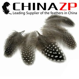 Gold Manufacturer China ZP Crafts Factory 500pcs lot Unique Natural Polka Dot Guinea Fowl Feathers for Fascinators