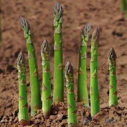 Wholesale 20Pcs Asparagus Seeds Organic Heirloom Rare Green Vegetable Perennial Garden Bamboo STE