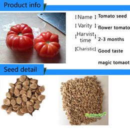 Vegetable Asian Solanum lycopersicum tomato hybrid F1 Garden indetermidate red determidat plant at home domercation NON GMO F1 organic seeds