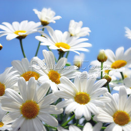 Wholesale 400 Impressive GERMAN FRAGRANT CHAMOMILE FLOWER HERB CAMOMILE APPLE TEA SEEDS Free Shopping TT140