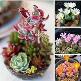 Wholesale 100pcs Mix Succulent plants Lithops seeds Stone Fungi fleshy seeds Bonsai plants Seeds for home garden