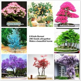Wholesale 8 kinds Bonsai Tree Seeds seeds Albizia orange Sakura Metasequoia Paulownia Wisteria Japanese Maple Taocan