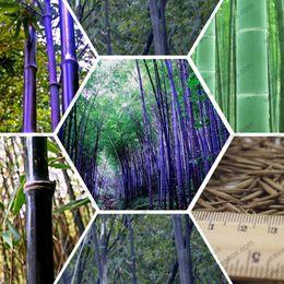 Wholesale Rare purple Timor Bamboo Seeds Bambusa black bamboo seeds planted courtyard Yi package
