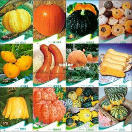 Wholesale 12 Original Packs About Seeds Super Sweet Pumpkin Combo Seeds Delicious Healthy Squash Vegetable Seeds Mysterious Gift