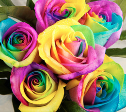 Wholesale Perennials Beautiful Flowering Roses Rose Seeds Rainbow Colors Love the color rose seeds rainbow garden seeds