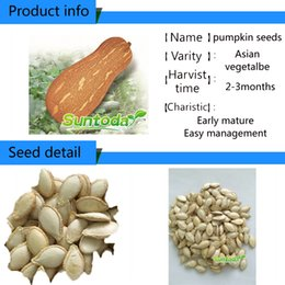 2017 heat Garden Asian vegetabl F1 hybrid NON GMO Asian vegetable Cucurbita maxima Japanese Pumpkin Kabocha Chinese Little Pumpkin seeds