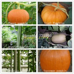 Wholesale 6 melons packages delicious fun planting organic vegetables seeds giant pumpkin gourd grow your own vegetable base
