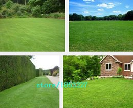 Wholesale Hot Selling Bluegrass Seed Lawn Seeds Garden Planting Seed Home Garden