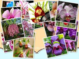 Wholesale Garden Plant authentic Smile Face Bee Orchid seeds flower seeds rare plants Bonsai organic seeds Bonsai