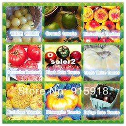 Wholesale Vegetable seeds Kinds seeds Different varieties of Tomato seeds Non GMO Organic Food