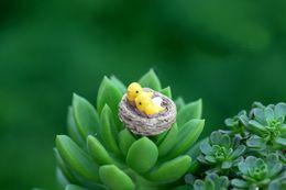 Wholesale 20 mini nest with birds miniatures lovely cute fairy garden gnome moss terrarium decor crafts bonsai diy doll house c113
