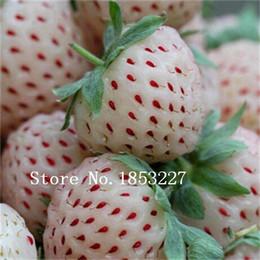 Скидка красный восхождение 100 Climbing красной клубники Семена очень большие и вкусные, Хеерлум овощи и семена фруктов
