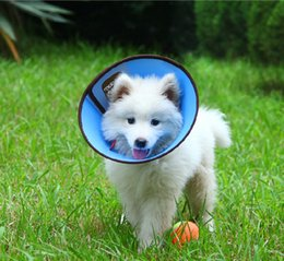 Wholesale Pet cases Pet supplies Beauty mask The bit circle feeding medicine Take a shower Color collar head pieces a can mixed colors