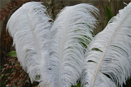 wholesale 20-22inch(50-55cm) white Ostrich Feather for Wedding centerpiece wedding table decor home table centerpiece Party centerpiece