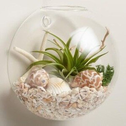 "Bread type 10cm half globe 5"" DIY wall terrarium wall decor bubble wall planter vase for home decoration house ornament"