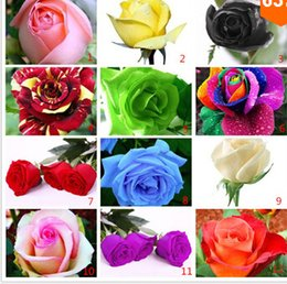Wholesale Flower pots planters Seeds Rainbow rose seeds Beautiful rose seed Bonsai plants Seeds for home garden