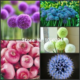 Wholesale 300PC Exotic onion seeds Delicious ingredients necessary kitchen supplies Vegetable seeds fruit seeds Flower plants