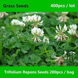 Wholesale Family Fabaceae Trifolium Repens Seeds Very Popular Perennial Plant White Clover Seeds Natural Herbaceous Dutch Clover Grass Seeds