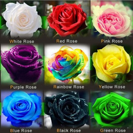 Wholesale Flower seeds Rose Seeds Bonsai Pink Black White Red Purple Green Yellow Blue Rainbow Colors Home Garden