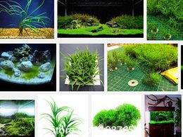 Wholesale Promotion Hot selling aquarium grass seeds mix water aquatic plant grass seeds kinds family easy plant seeds free
